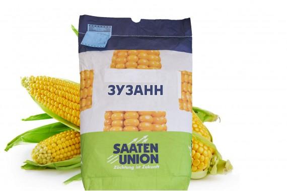 Насіння кукурудзи Saaten Union Зузанн (середньоранній сорт)
