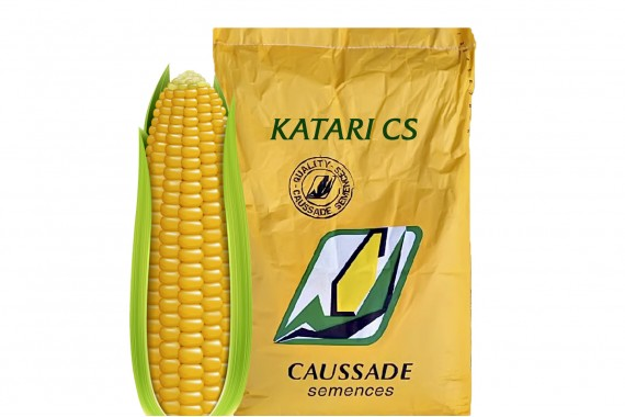 Насіння кукурудзи Caussade Semences Катарі КС
