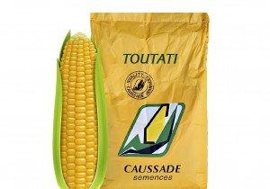 Насіння кукурудзи Caussade Semences Тоутаті КС