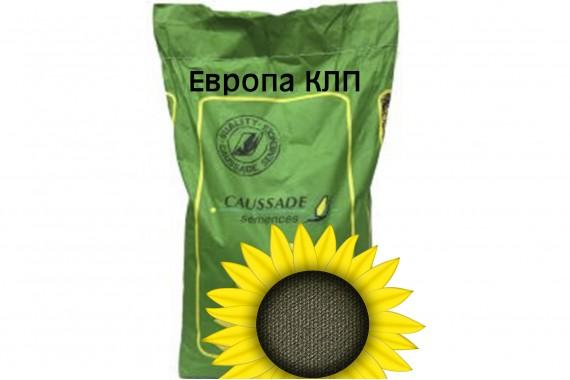 Насіння середньораннього соняшнику Caussade Semences Європа КЛП