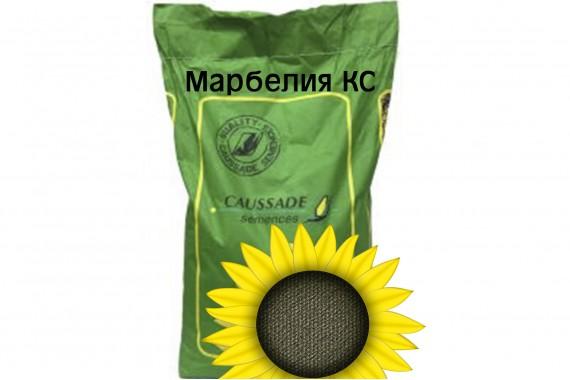 Посівний матеріал соняшнику Caussade Semences Марбелія КЛ