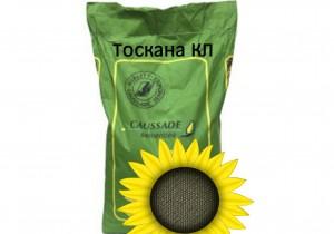 Насіння соняшнику Caussade Semences Тоскана КС