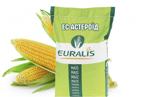 Гібрид кукурудзи Euralis Semences ЄС Астероїд