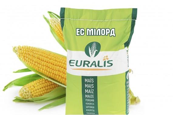 Високоврожайний гібрид кукурудзи Euralis Semences ЄС Мілорд