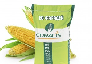 Насіння кукурудзи Euralis Semences ЄС Фарадей