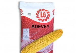 Насіння середньоранньої кукурудзи Limagrain Адевей