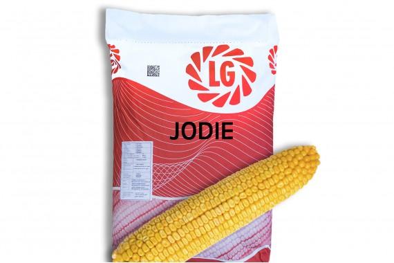 Середньостиглий гібрид кукурудзи Limagrain Джоді