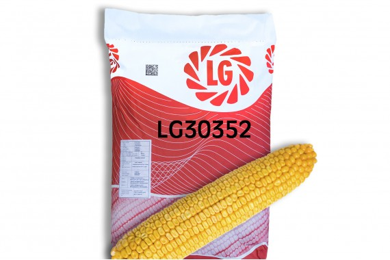 Високоврожайний гібрид кукурудзи Limagrain ЛГ 30352