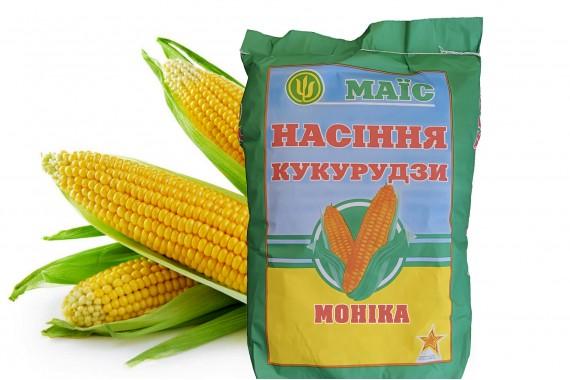 Насіння зубоподібної кукурудзи АПК Маїс Моніка 350 МВ