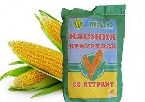 Насіння трилінійної кукурудзи АПК Маїс Аттракт (ФАО 230)