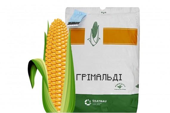 Посівний матеріал кукурудзи Saatbau Грімальді