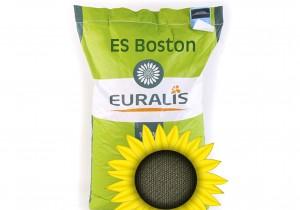 Насіння соняшнику Euralis Semences Бостон ЄС СУ Пончо