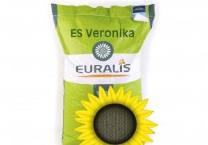Насіння соняшнику Euralis Semences Вероніка ЄС Пончо