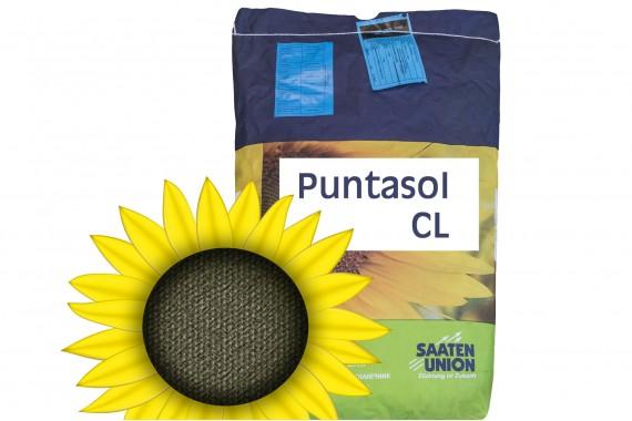 Посівний матеріал соняшнику Saaten Union Puntasol CL
