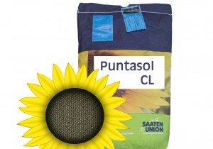Puntasol CL