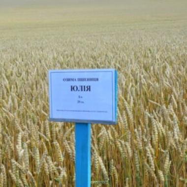 Насіння озимої пшениці чеської селекції Selgen Юлія
