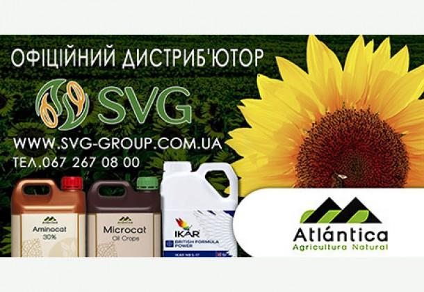 Рекомендації щодо вирощування соняшника