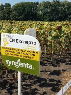 Посівний матеріал соняшнику Syngenta СІ експерт