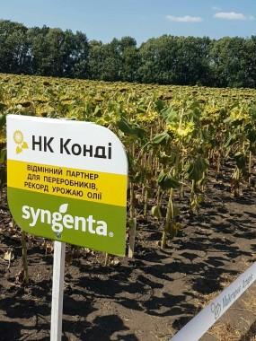 Гібрид насіння соняшнику Syngenta НК Конді