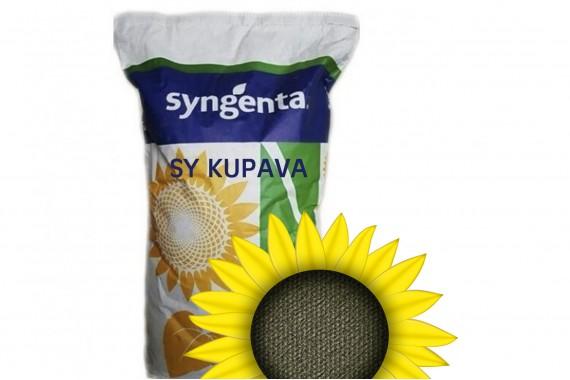 Гібрид соняшнику з високим вмістом олії Syngenta СІ Купава